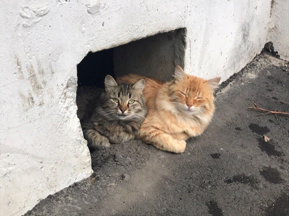 Подвалы откроют для котиков